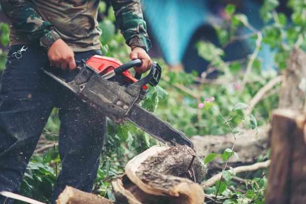 tree remval service