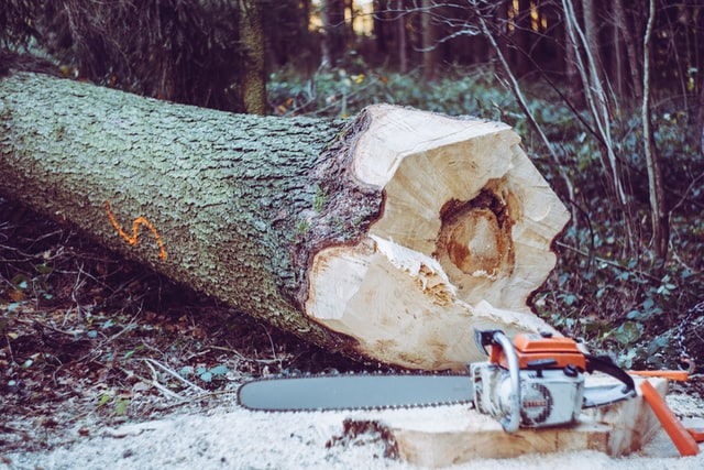 Tree removal montgomery county maryland