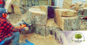 Tree removal service in Rockville MD