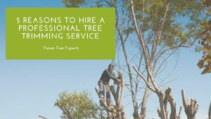 5 reasons to hire tree service company rockville md