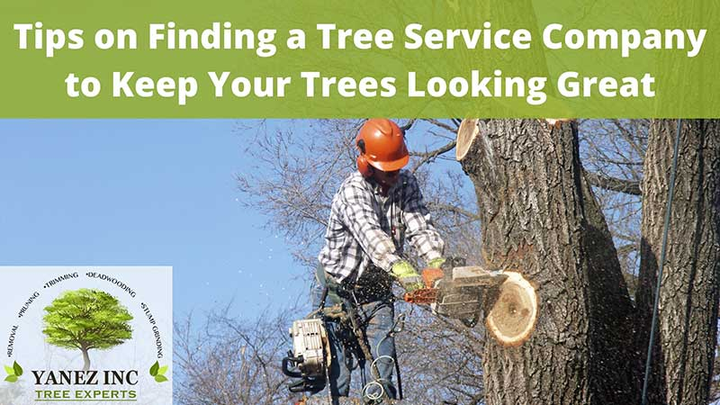 Tips on finding a local tree service company